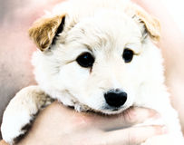 Puppy take cares on hand. Savee puppy royalty free stock photos