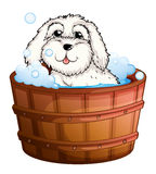 A puppy taking a bath Royalty Free Stock Photography