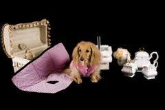 Puppy tea party Stock Photos