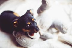 Puppy with teddy bear Stock Photography