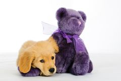 Puppy and a Teddy Bear. An adorable 9 week old Golden Retriever Puppy posing next to a purple teddy bear Royalty Free Stock Photo