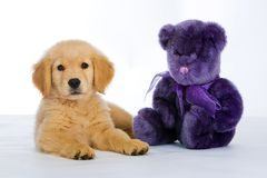 Puppy and a Teddy Bear Stock Photo