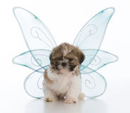 Puppy with three legs Stock Image