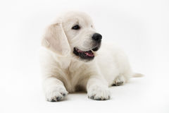 Puppy time Royalty Free Stock Photos
