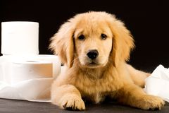 Puppy in toilet paper pile Royalty Free Stock Photos