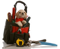 Puppy in tool kit. American cocker spaniel puppy sitting inside tool kit Stock Photo