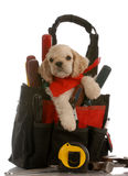 Puppy in tool kit