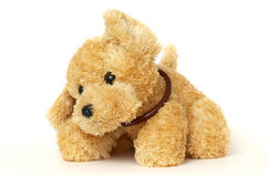 Puppy toy Stock Images