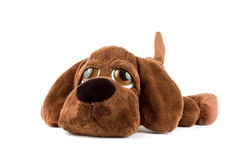 Puppy toy. Sad puppy toy over white background Stock Photography