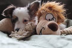 Puppy and toy. A puppy hanging out with its new stuffed animal best friend Stock Photo