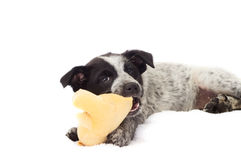 Puppy toy game Royalty Free Stock Photos