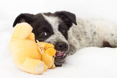 Puppy toy game Stock Photos