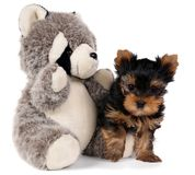 Puppy and toy panda. Isolated on white Stock Photo
