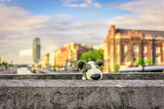 Puppy toy travel Royalty Free Stock Images