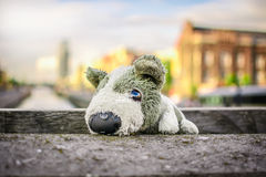 Puppy toy travel Royalty Free Stock Photos