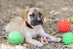 Puppy Toys Royalty Free Stock Photos