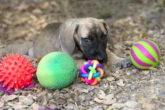 Puppy Toys Royalty Free Stock Photos