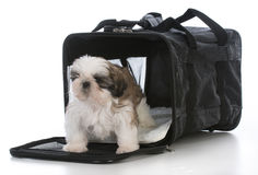 Puppy in travel carrier Stock Photography