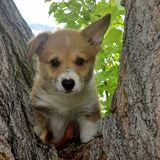 Puppy in a tree royalty free stock photography