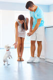 Puppy tricks. Happy couple with a dog in the kitchen. Stock Image