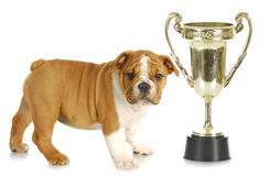 Puppy with trophy Royalty Free Stock Image