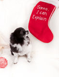 Puppy in trouble Royalty Free Stock Photo