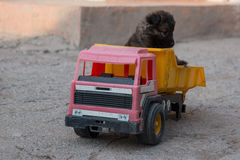 Puppy in a Truck Stock Photos