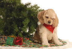 Puppy under christmas tree Royalty Free Stock Photography