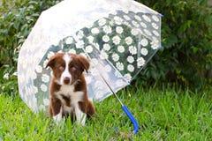 Puppy under umbrella Stock Photo