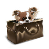 Puppy in valise Stock Photo