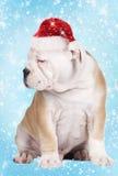 Puppy van de besnoeiings het continentale buldog met Kerstmishoed stock afbeeldingen