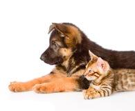 Puppy van de close-up het het Duitse herder en katje die van Bengalen in profiel liggen Geïsoleerde Royalty-vrije Stock Afbeeldingen