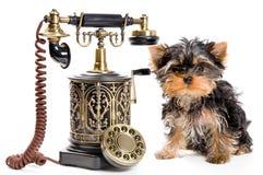 Puppy van een spitz-hond met telefoon royalty-vrije stock afbeelding