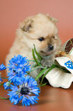 Puppy with a vase Royalty Free Stock Photography