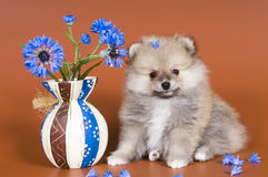 Puppy with a vase Stock Photography