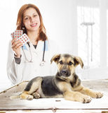 Puppy and vet Royalty Free Stock Image