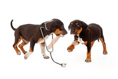 Puppy Veterinarian and Patient Royalty Free Stock Photo