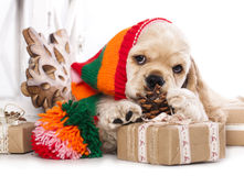 Puppy and  Vintage gift box Royalty Free Stock Images