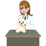 Puppy Visiting Veterinarian Royalty Free Stock Image
