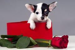 Puppy voor heden. Stock Afbeelding