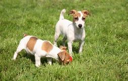Puppy on walk Stock Image