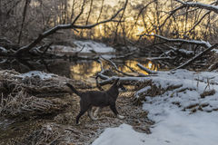 Puppy is walking on the snow-covered riverbank Royalty Free Stock Photo