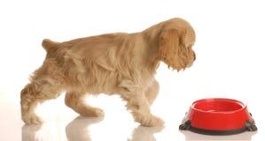 Puppy walking to food dish Stock Photos