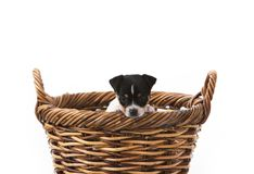 Puppy wants out of basket