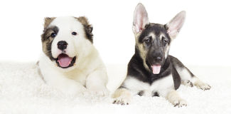 Puppy watching Stock Images