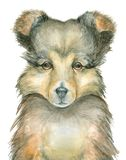 Puppy watercolor avatar Royalty Free Stock Photography