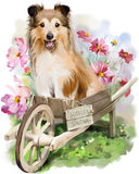 Puppy watercolor illustration. Сollie sitting in the garden cart Stock Photos