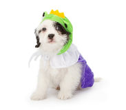 Puppy Wearing Frog Prince Costume Stock Photo