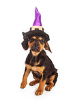 Puppy Wearing Halloween Witch Hat Stock Photography