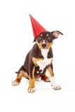Puppy wearing red party hat Royalty Free Stock Photos